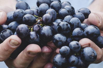 Produttori di Vino Lucca